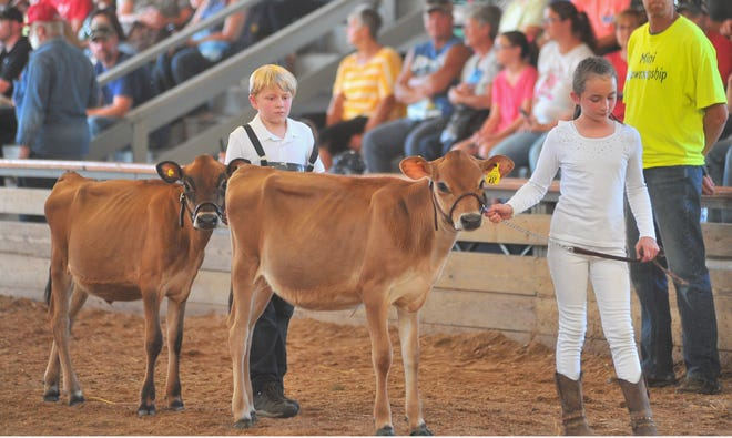 A variety of livestock shows will take place at Wayne County Fair, which runs Sept. 12-17.