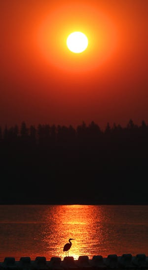 Smoke from wildfires in Central Washington turns the sunrise in Kitsap County red and orange as a heron hunts for breakfast at the Brownsville Marina on Tuesday.