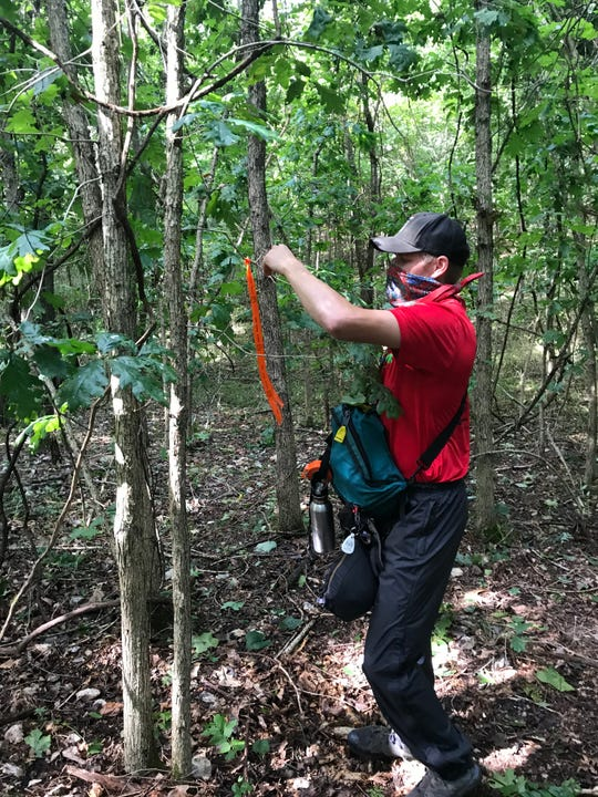 Subcontractor Branden Schwab ties orange markers on trees to mark the path of the new 7-mile mountain bike trail at Fellows Lake.