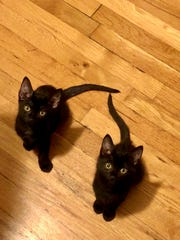 Who said black cats were bad luck? These two look like they only bring goodness.