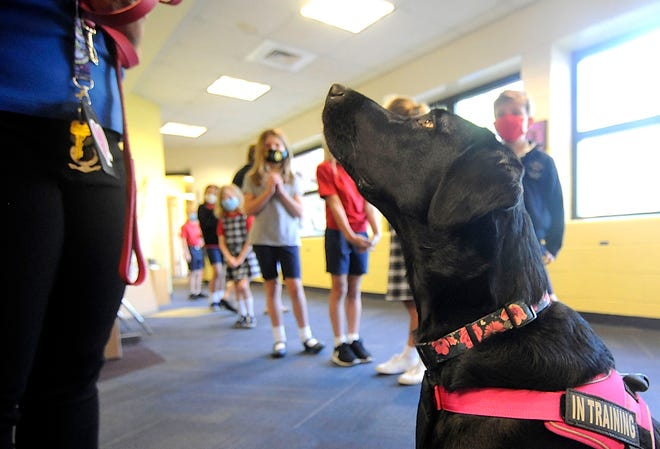 Eliie, a black lab therapy dog in training looks at her owner Lisa Manges as the St. Edward School students pass by in the hallway on Wednesday.