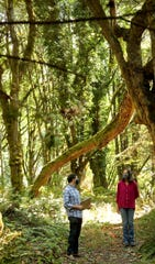 Bainbridge Island Land Trust's Cullen Brady and Jane Stone stand on one of the trails among the towering trees as they talk about the acquisition of the  35-acre Rockaway Bluff Preserve as part of the group's Stand For The Land campaign, on Thursday, Sept. 10, 2020.