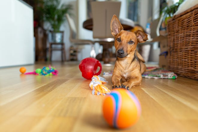 Here's how to choose the right toys for your pet.