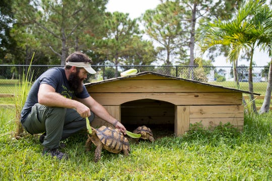 Adam Pottruck feeds two of his tortoises some romaine as a treat on Wednesday, September 10, 2020, at his home on Pine Island.
