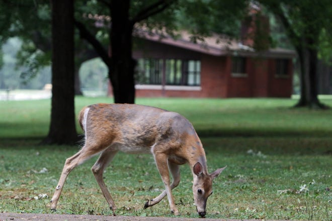 Fall in Michigan means the state's deer population is more active.