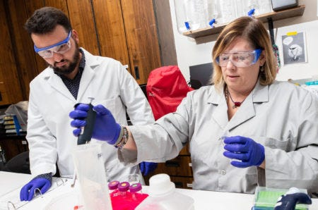 Dr. Jamie DeWitt, right, and Samuel Vance, a biomedical science master's program student, conduct research into the health effects of PFAS in DeWitt's lab at East Carolina University's Brody School of Medicine. [Photo credit: East Carolina University]