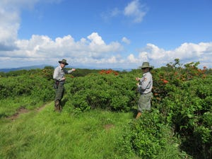 Vegetation specialists Dan Bryson and Corey Mullins point out some of the azaleas on Gregory Bald. Courtesy of NPS.