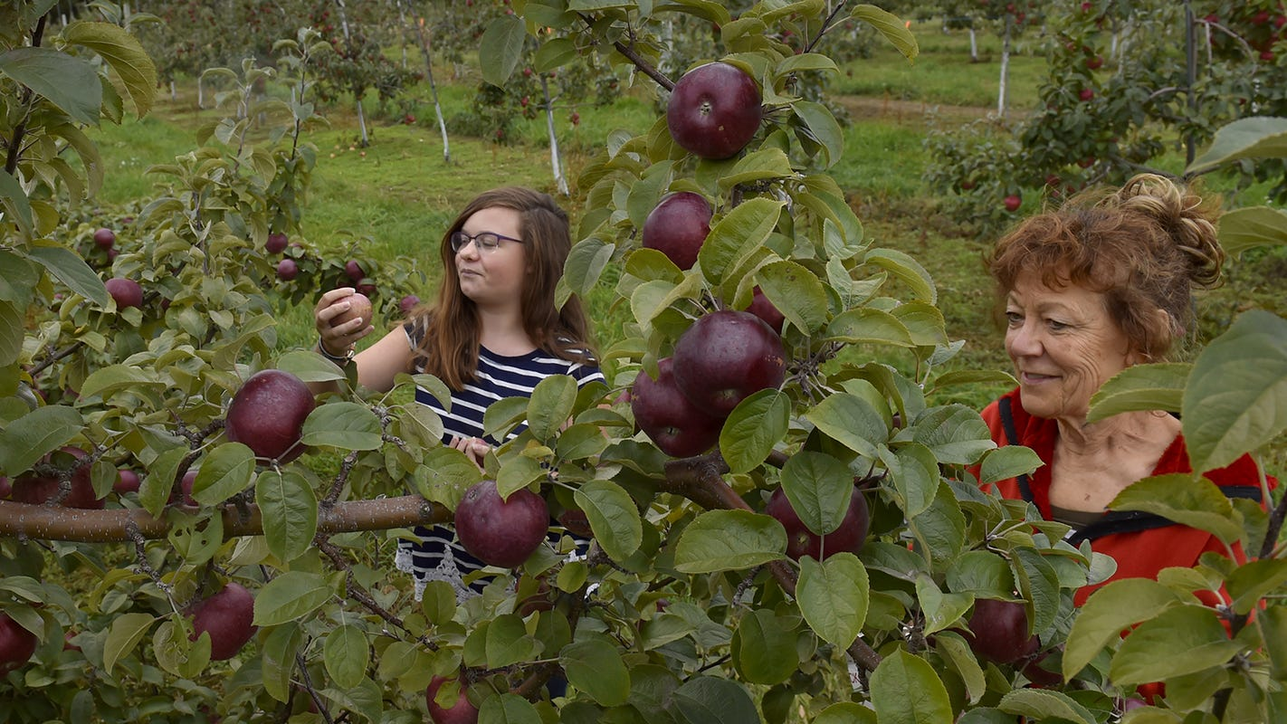 Apple picking in Door County: A bumper crop is available for pick-your-own season