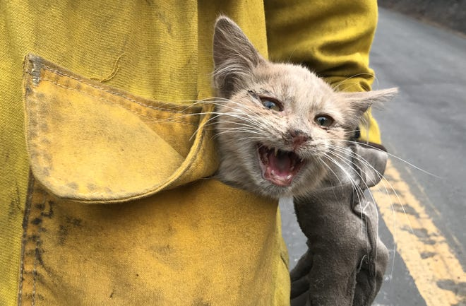Daniel Trevizo, a captain with the Los Angeles County Fire Department, keeps this young cat in his pocket for safekeeping Thursday, Sept. 10, 2020, after he rescued it during the Bear Fire near Lake Oroville.