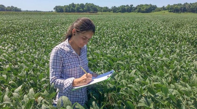 "Recently, Mirian Pimentel, a PhD student, and a group of plant pathologists at Southern Illinois University, discovered a promising new tool to fight sudden death syndrome (SDS). They observed that several biological control agents (BCA), or beneficial fungi, were able to substantially reduce the growth of the causal pathogen agent of SDS. In some cases, these agents even overgrew the pathogen, parasitized it, and displayed evidence of ""feeding"" on it."