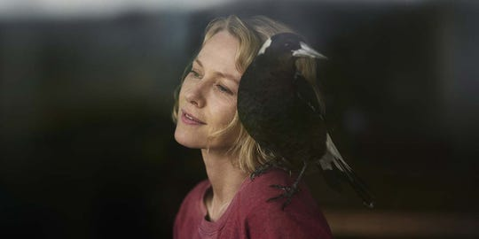 "Naomi Watts stars as a paralyzed woman who mothers a magpie back to health as she recovers as well in ""Penguin Bloom."""