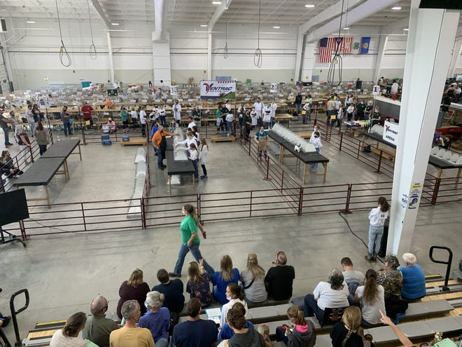 The Junior Rabbit Show in the Event Center kicked off the exhibitions at the Wayne County Fair this year along with the goat show.