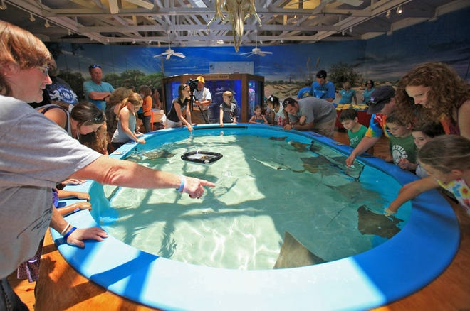 Familes and children get a chance to pet some Atlantic stingrays in the petting pool at the Marine Science Center in Ponce Inlet in 2012. The Marine Science Center is one of many projects funded by the Volusia County ECHO program, a tax that has funded environmental, cultural, historic and outdoors programs since 2001. Voters are being asked on their Nov. 3 ballot whether to continue the tax.