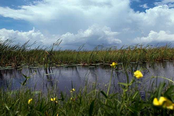 EVERGLADES NATIONAL PARK --  Rain clouds are seen over the Florida Everglades in 2011 in the Everglades National Park. [Photo by Joe Raedle/Getty Images]