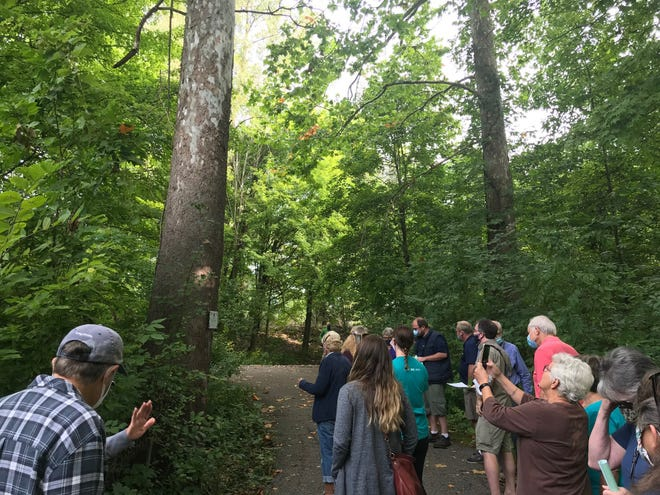 The huge sycamore tree at left at North Lake Park is one of 30 trees identified along the Richland B&O Trail as part of the new walking arboretum.
