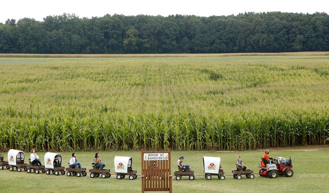 Passengers on the Conestoga Wagon Train ride past the Ohio Corn Maze at Ramseyer Farms Friday, Sept. 11, 2020 in Wooster, Ohio.   [Karen Schiely/Beacon Journal]