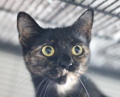 Marigold was one of the cats rescued from a home on Aspen Way in Doylestown Township in May 2019.