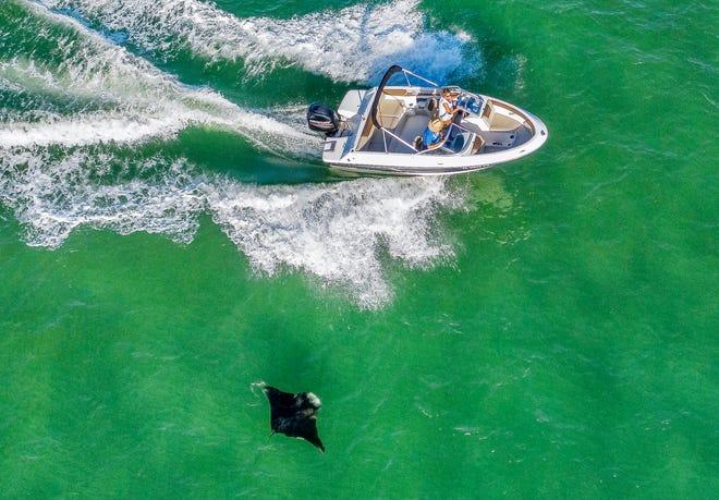 A manta ray swims through the ocean as a boat passes by next to the Boynton Inlet near Boynton Beach last October.