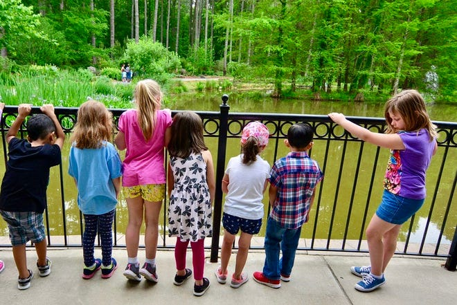 Children view Cape Fear Botanical Garden's cypress pond from a balcony at the garden's welcome center.The new children's garden will provide a much higher vantage point from the opposite side of the cypress garden.