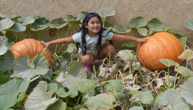 With help from her grandmother, Susan Rutledge, Dannah Rutledge, 7, has grown two giant pumpkins estimated to weigh nearly 100 pounds.