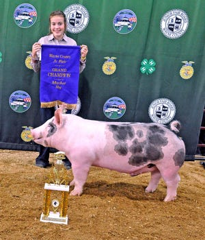 Caydence Scale showed the overall champion market hog Tuesday in the Junior Fair Market Swine Show at the Wayne County Fair.