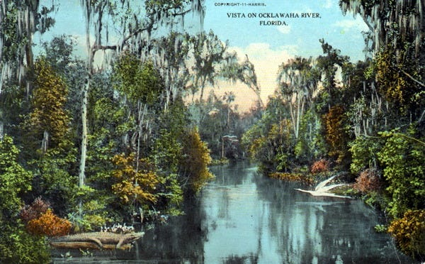 A 1911 postcard depicts an idealized Ocklawaha River before the Cross-Florida Barge Canal.