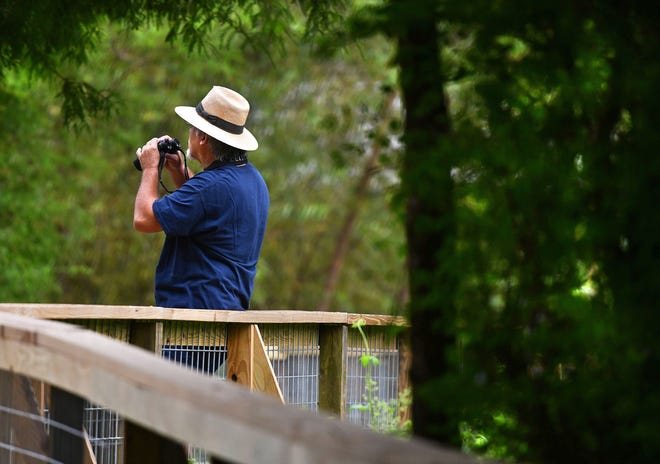 The Cottonwood Trail Boardwalk Restoration Project is almost completed, with an official reopening of the boardwalk later this month. John Bruhnke watches birds along the boardwalk on the Cottonwood Trail in Spartanburg, Tuesday morning, September 15, 2020.
