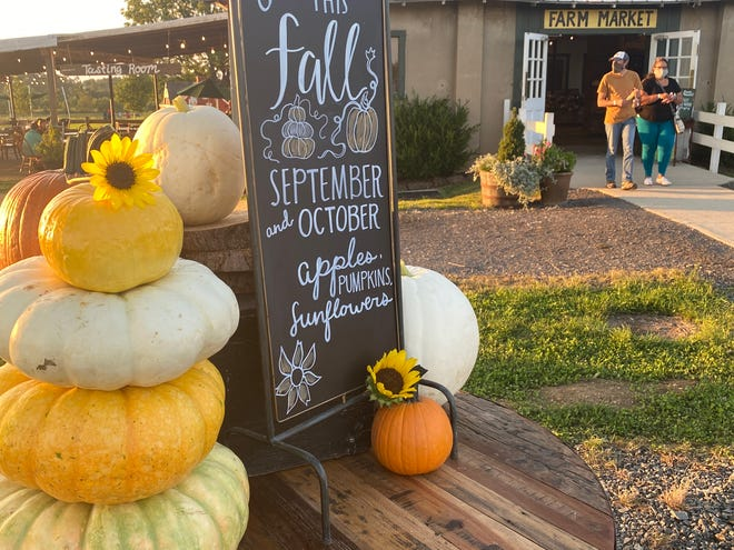 Fall Pumpkins, apples and sunflowers can be picked now at Johnson's Locust Hall Farm in Springfield in South Jersey.