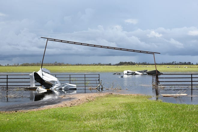 Metal panels are wrapped around a damaged gate at Sweet Lake in Calcasieu Parish. The LSU AgCenter is accepting applications to help livestock producers obtain donated fencing and other supplies to rebuild.