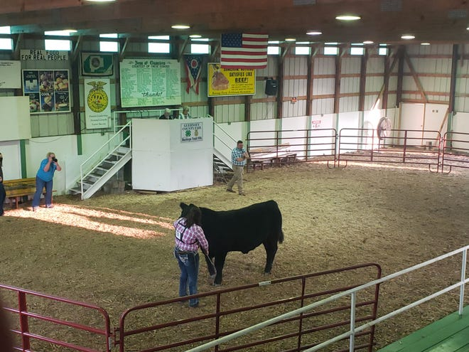 With the not knowing if a fair would take place this year, some Jr. Fair exhibitors opted not to purchase livestock to exhibit this year. Aliza Bates, of Quaker City, was the only exhibitor in the rate of gain class for her breed of cow during the Market Steer Show on Tuesday night.