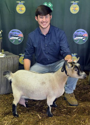 Jackson Sanine won the Showmanship Challenge and Pygmy Goat Showmanship - 17 & 18 year olds.