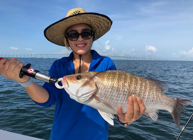 Sandra Gutierrez of Homosassa caught this 22-inch mangrove snapper while fishing the shipping channel in lower Tampa Bay with Capt. John Gunter of Off The Hook Charters recently.