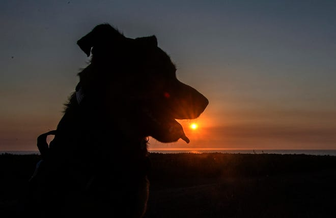 Clifford Oto's dog, Maisie, takes in the sunset at Poplar Beach on Memorial Day weekend in Half Moon Bay.