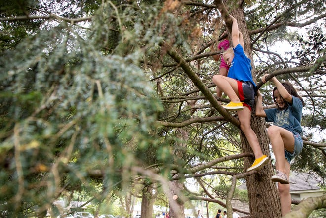 Children climb a tree at Seneca Park on Wednesday evening as their parents get in some socialization time as siblings practice sports. Sept. 16, 2020