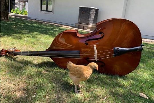 Students were assigned to take a photo of their instrument with an animal at home while virtual learning through Arizona School for the Arts.