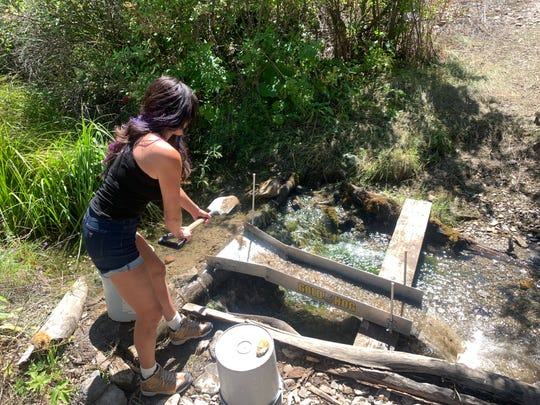 The author tries her hand at shoveling pay dirt into the sluice. It might take several buckets of dirt to extract even a few small grains of gold.