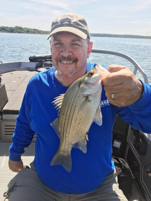 White bass are fun to catch on spinning tackle or fly rod rigging.