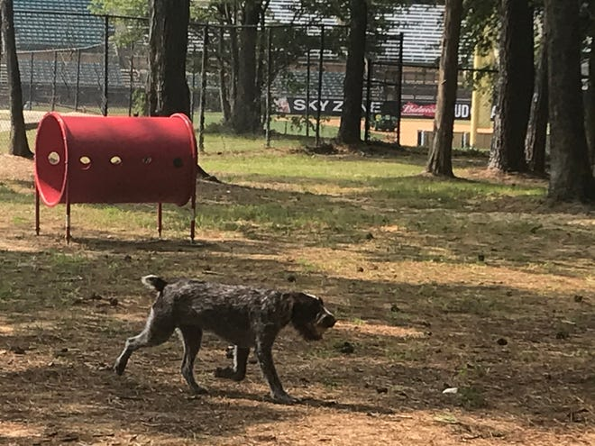 A dog enjoys the Dr. Vicki Schneider Lake Dog Park on Friday, Sept. 18, 2020, just after the park was officially dedicated by local leaders.