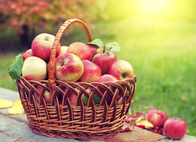 Duffield's Farm will host a Food Truck & Apple Festival from 11 a.m. to 5 p.m. Sept 19 at 280 Chapel Heights Road in Sewell. The event will feature food trucks, hayrides, apple picking, a corn maze, hot apple cider donuts and more.