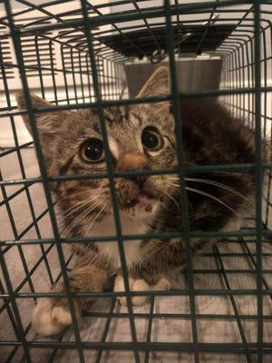 One cat rescuers was able to trap at least a half-dozen cats and kitten in a large colony located on the Quakertown public works property before a wildlife company came in and removed the rest. Controversy has arisen over what happened to the cats.