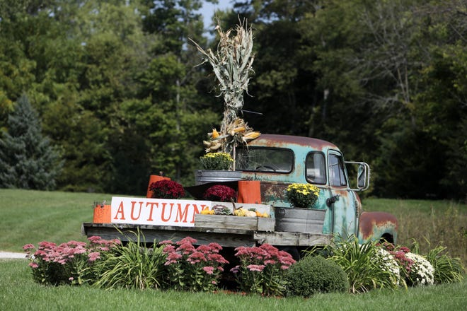 Betty, a 1954 Chevrolet pick up truck given by Ryan Jacks to his wife Stefanie six years ago for the couple's anniversary, is decorated for the fall season Monday outside the couple's home north of Burlington off of Des Moines County 99. Stefanie has been decorating Betty to correspond with the seasons for the past six years. Tuesday marks the autumnal equinox which is the astronomical start of the fall season in the Northern Hemisphere.