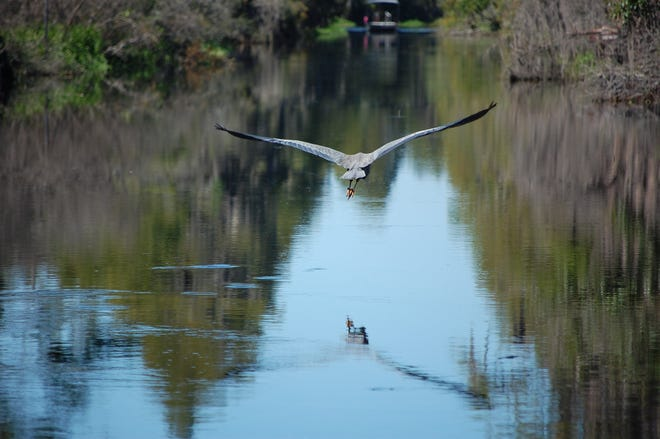 A wide variety of birds make their homes in the Okefenokee National Wildlife Refuge.