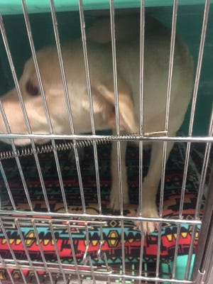 Some dogs were placed in cages that were too small, former employees said.
