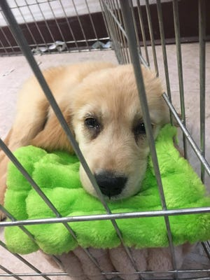 Some puppies purchased from commercial breeders were lethargic and sick, former employees told anti-puppy mill activists.