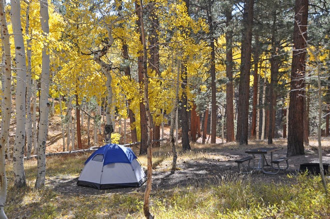 Fall colors at the North Rim Campground in Grand Canyon National Park.