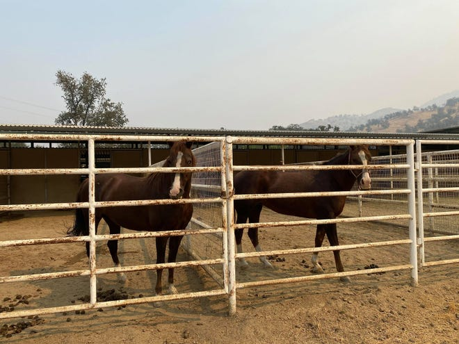Horses owned by the Fleeman family were temporarily re-located to a friend's ranch during the SQF Complex Fire.