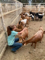 Jayme Fleeman's granddaughter, Faith, helps take care of the animals.