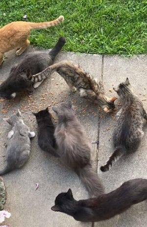 PAWS volunteers find that locals have been feeding community cats, which contributes to the Muskingum County high feral cat population.