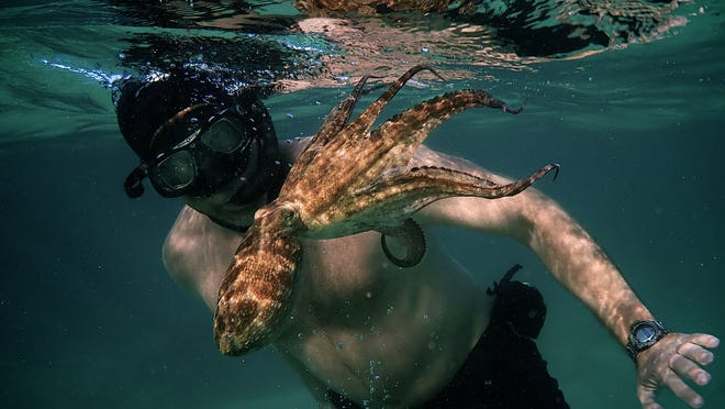"""Diver Craig Foster becomes fascinated with an octopus, and visits her for hundreds of days in a row, in """"My Octopus Teacher."""""""