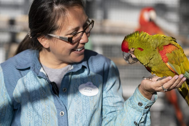 Jouy Luzania, senior trainer at Winged Encounters, holds Wizard, a red-fronted macaw. (Charlene Guilliams/Disney)